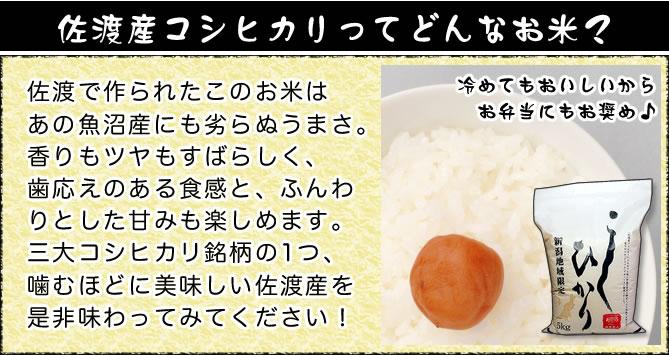 佐渡産コシヒカリはどんなお米?